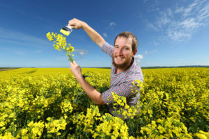 2.9.2016. EMBARGOED PLEASE SPEAK TO BRAD. Salter Springs farmer Tristan Chapman,25, in 140 hectares of Hyola canola . pic tait schmaal.